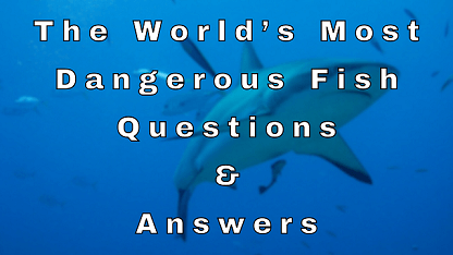 The World's Most Dangerous Fish Questions & Answers