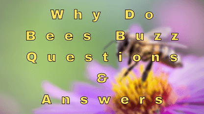 Why Do Bees Buzz Questions & Answers