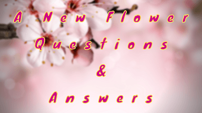 A New Flower Questions & Answers