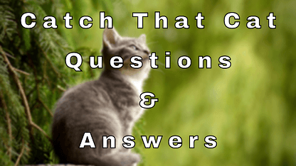 Catch That Cat Questions & Answers
