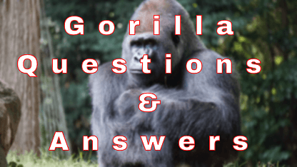 Gorilla Questions & Answers