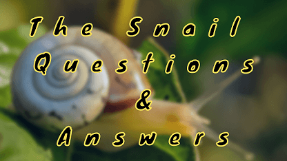 The Snail Questions & Answers