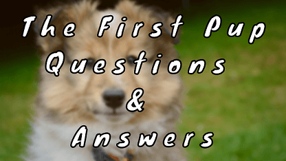 The First Pup Questions & Answers