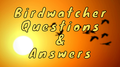 Birdwatcher Questions & Answers