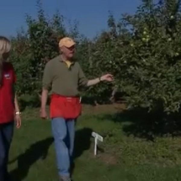 0921 do your job apples_181526