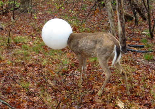 Deer Rescue_265758