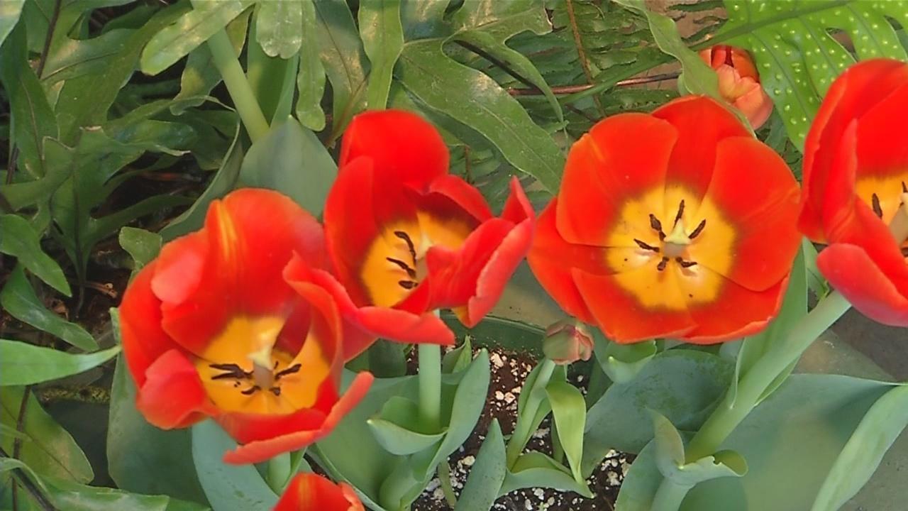 botanical pkg