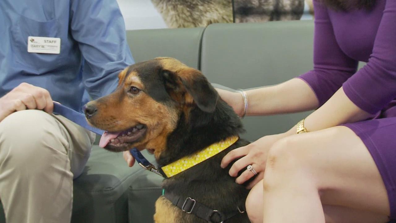 SPCA Monday: Norah