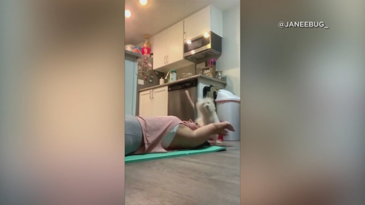 Dog high-fives owner while working out