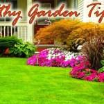 Effective Home Tips for a healthy garden