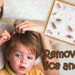 Remove lice and nits: Extremely effective home remedies