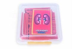 Tarjetas magnéticas Cuerpo Humano-Wiwi Didácticos de mayoreo