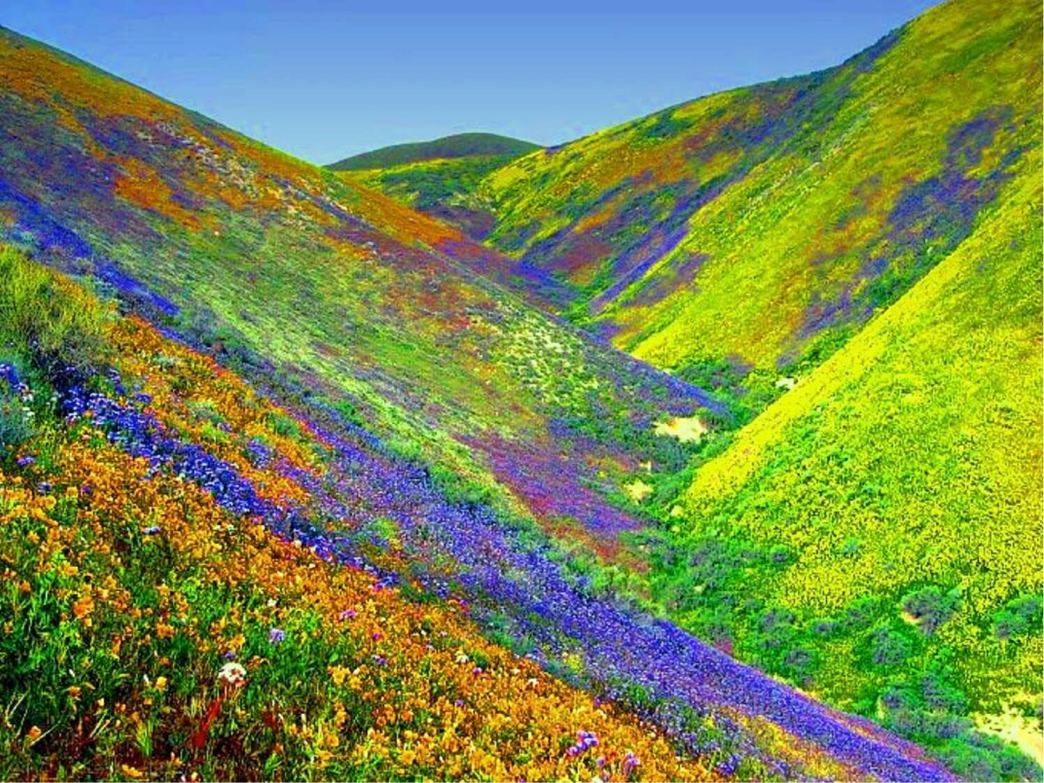 Valley of flowers the beauty of uttarakhand wiwigo blog valley of flowers is a fairy land situated high in the himalayas of the uttaranchal at an altitude of 3600 meters above sea level protected by snowy izmirmasajfo Images