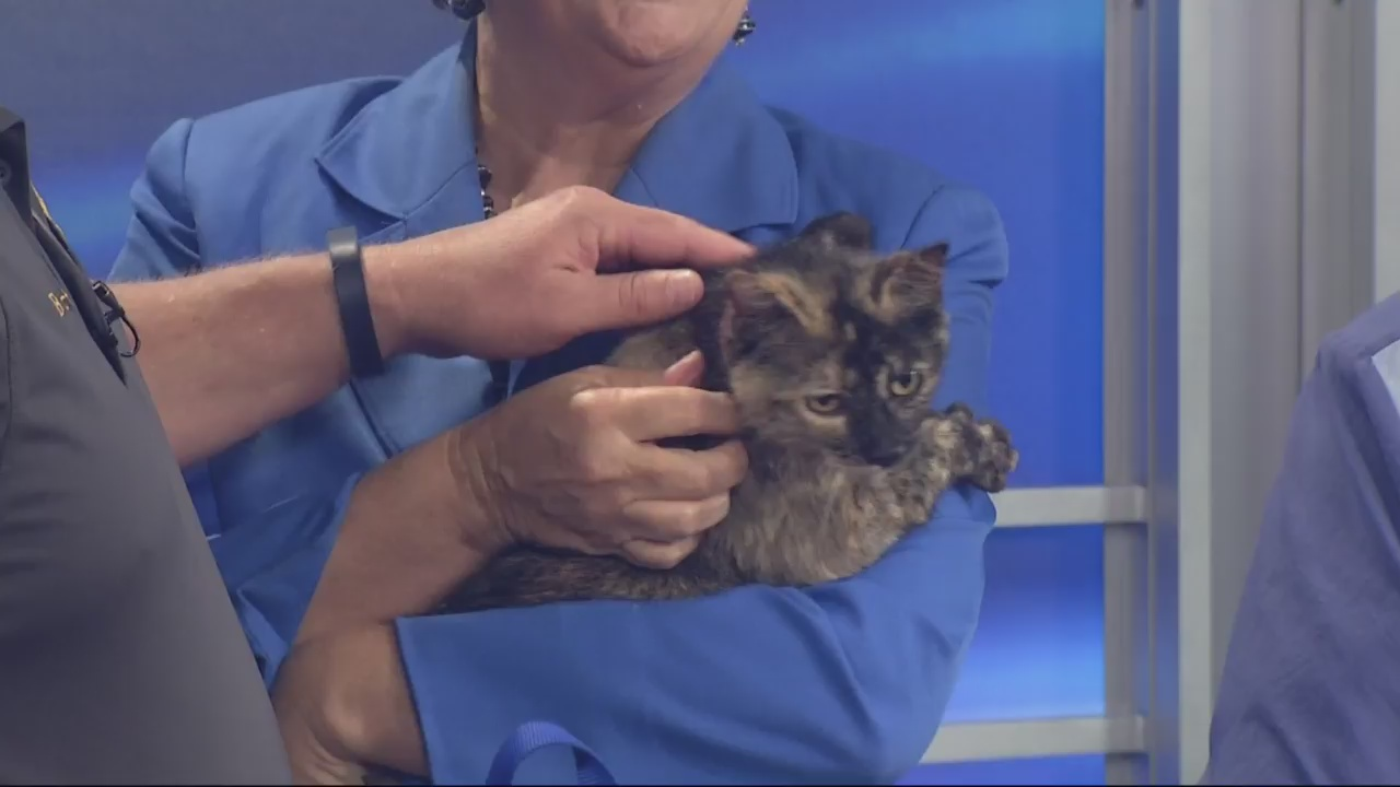 Adopt-A-Pet: May 4, 2016