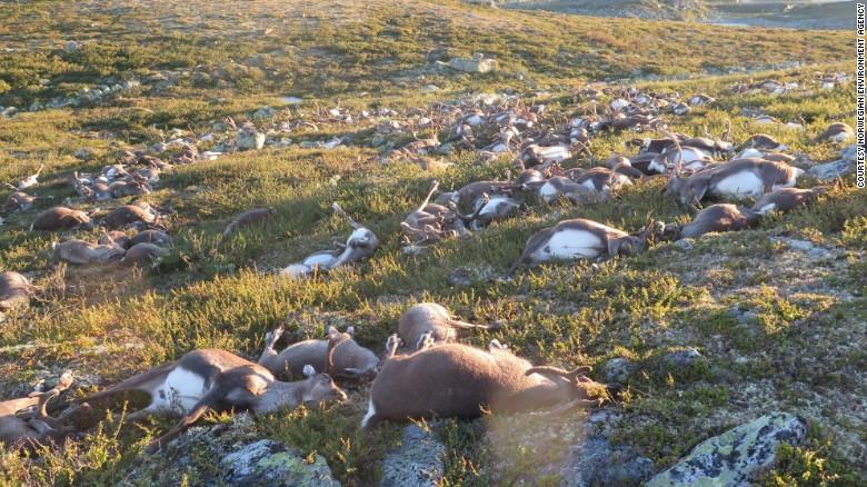 dead-reindeer_174554