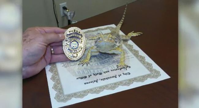 Drug-sniffing' lizard joins Arizona police force