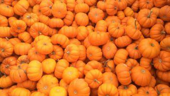 pumpkin_324387