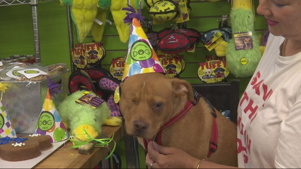 Dumpster_Pup_Trent_celebrating_1_year_of_0_20180704013824