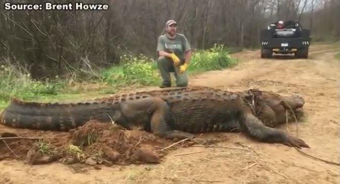 alligator_1551712306761.JPG