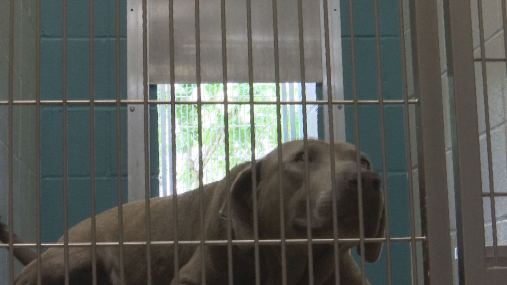 AIKEN CO ANIMAL SHELTER_1559957675247.jpg.jpg