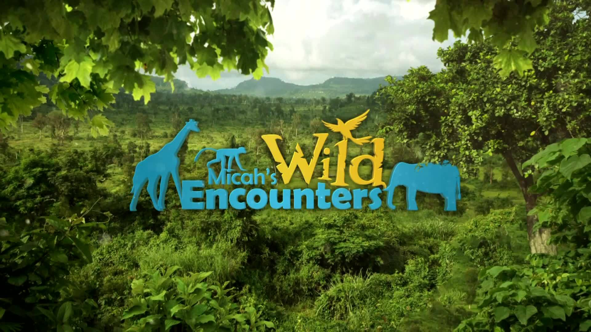Wild Encounters: Toucans