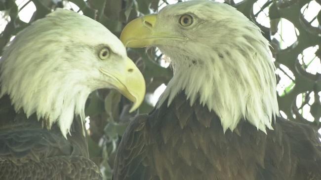 Eagles_27616
