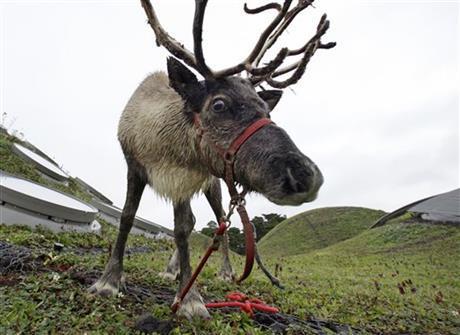 Rudolph_87634