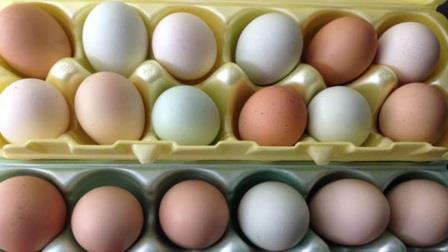 eggsweb_134999