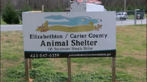 animal-shelter_268981