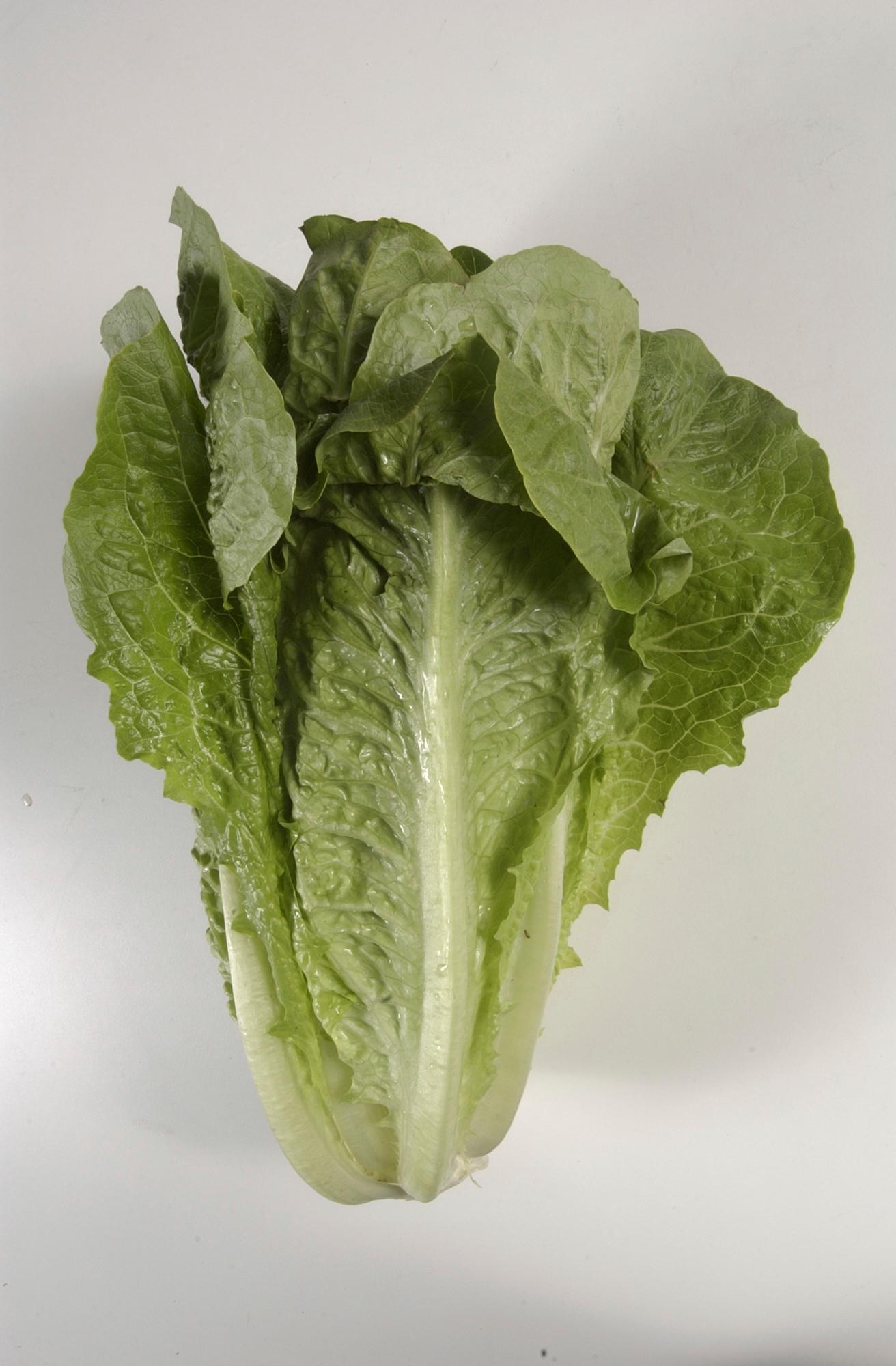 Lettuce_Outbreak_75115-159532.jpg95146002