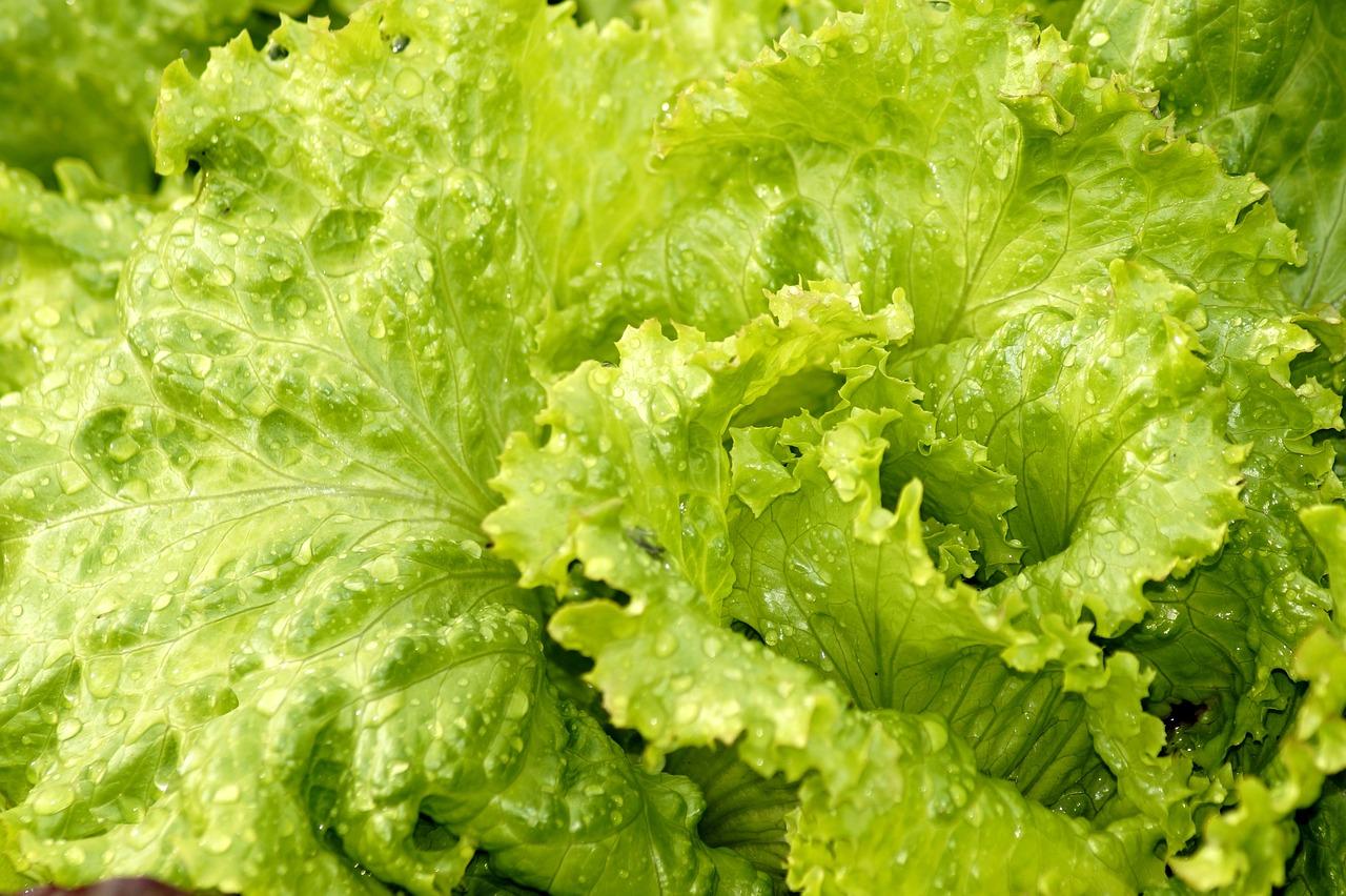salad-3560274_1280_1533135811193.jpg