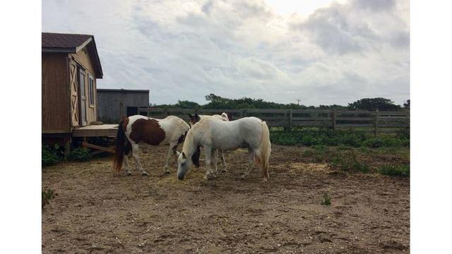 wild ponies_1537101003763.jpg.jpg