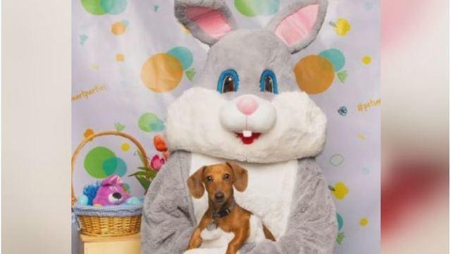 Easter Bunny_1555173035342.JPG.jpg