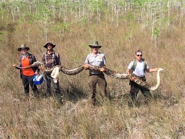 Snake_1554819542832.jpg