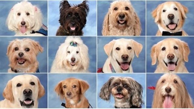 Therapy Dogs_1558213460664.jpg.jpg