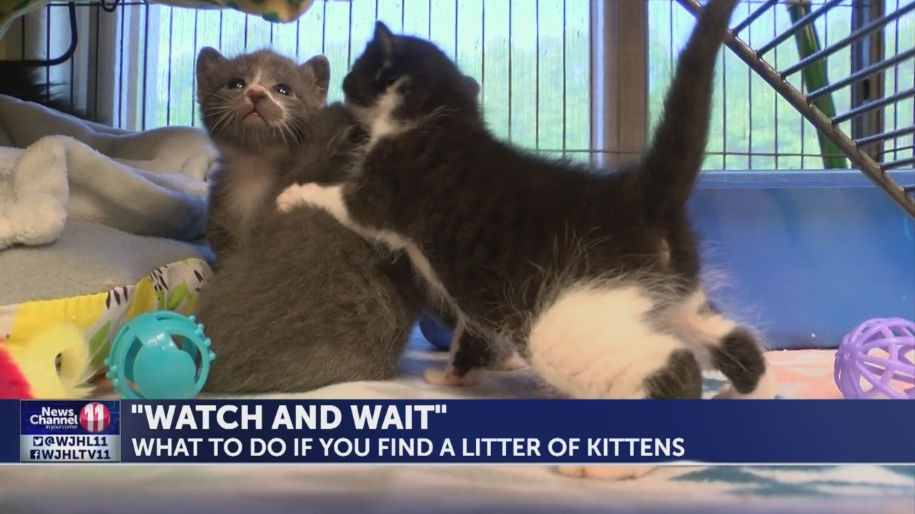 """Watch and Wait:"" What to do if you find newly born litters of kittens"