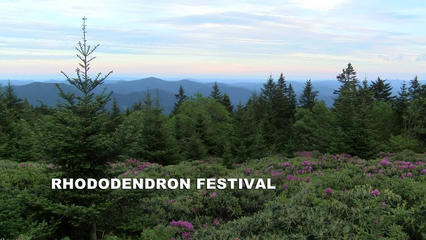 Around the Town: Rhododendron Festival, Downtown Bristol Night Market and more!