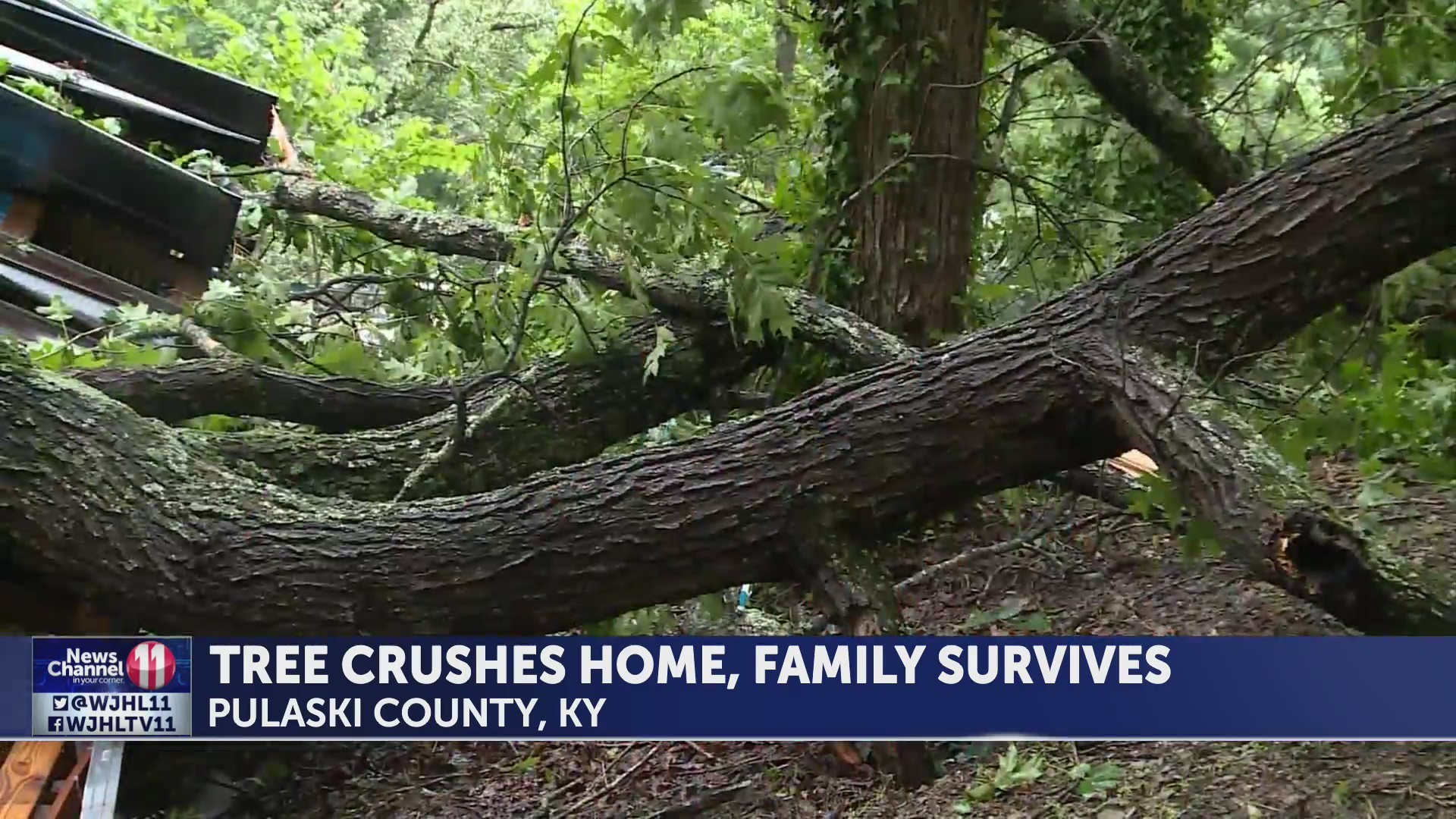 KY family survives fallen tree