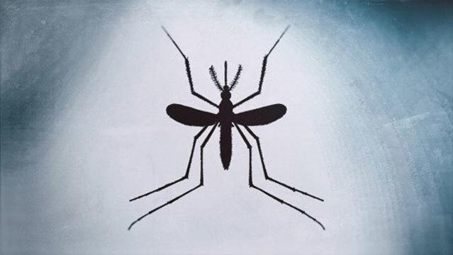 Mosquito_1533291296088.jpg