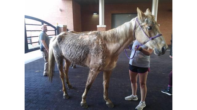 horsepic1_1559592667000.jpg