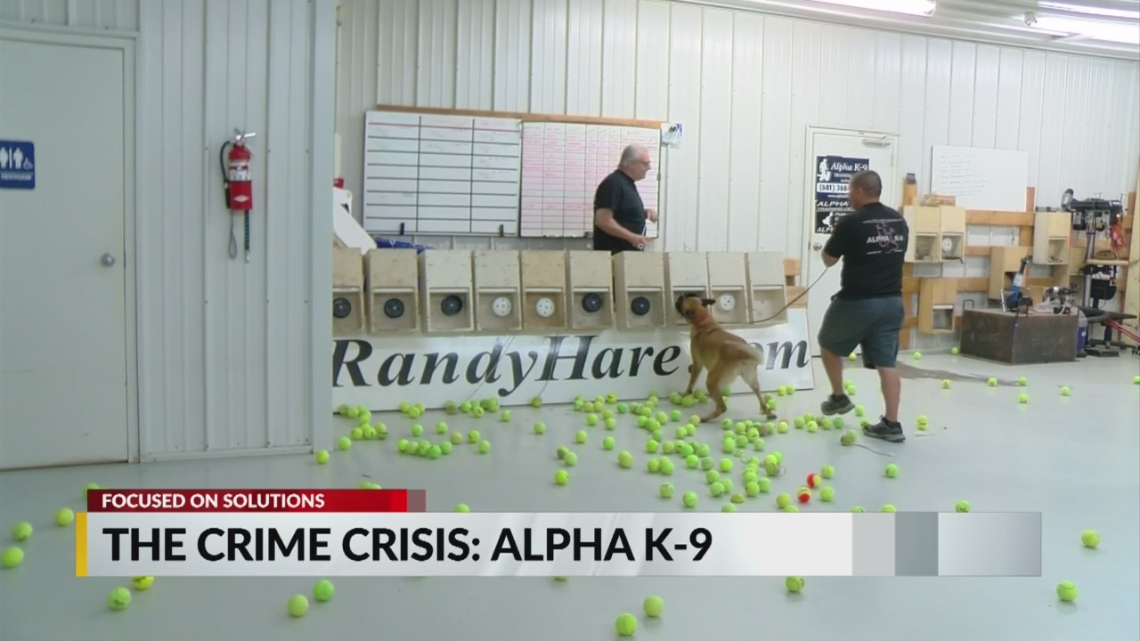 Focused on Solutions: Crime Fighting Dogs