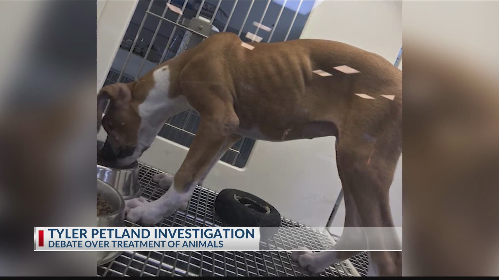 PETLAND_INVESTIGATION__Local_veterinaria_0_20190611031833-3156084