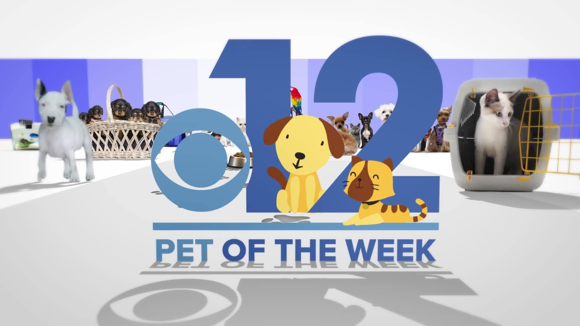Pet of the Week - Cookie