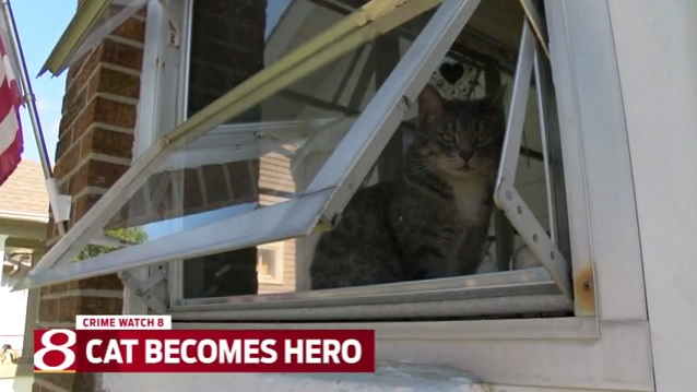 Indiana cat saves family from intruder_367149