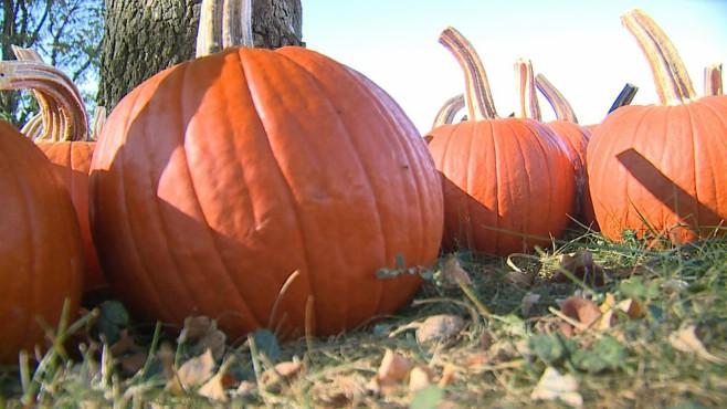 pumpkins_431338