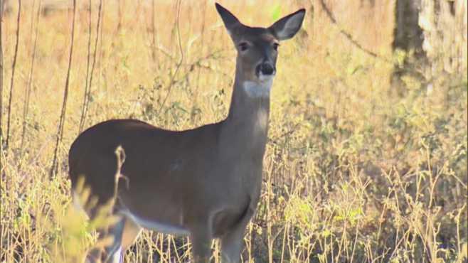 Hunters check over 14,000 deer in Ohio's muzzleloader season