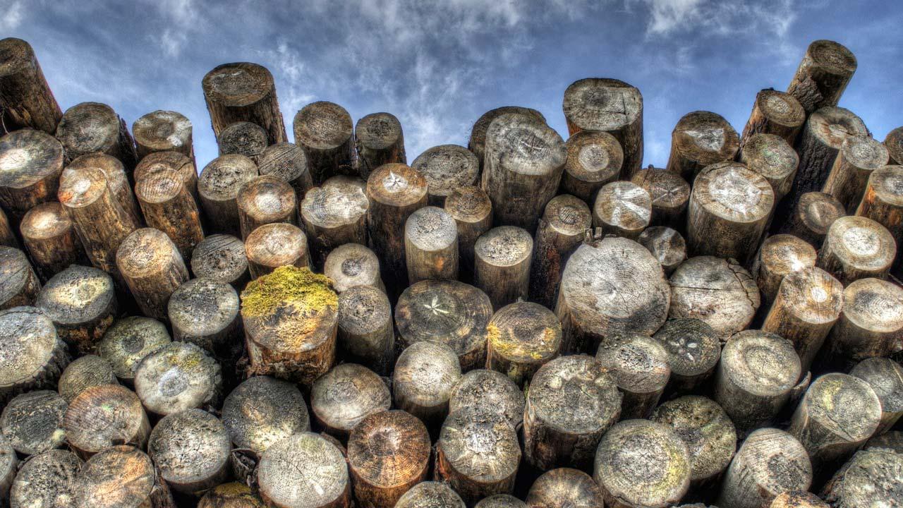 Timber generic 2