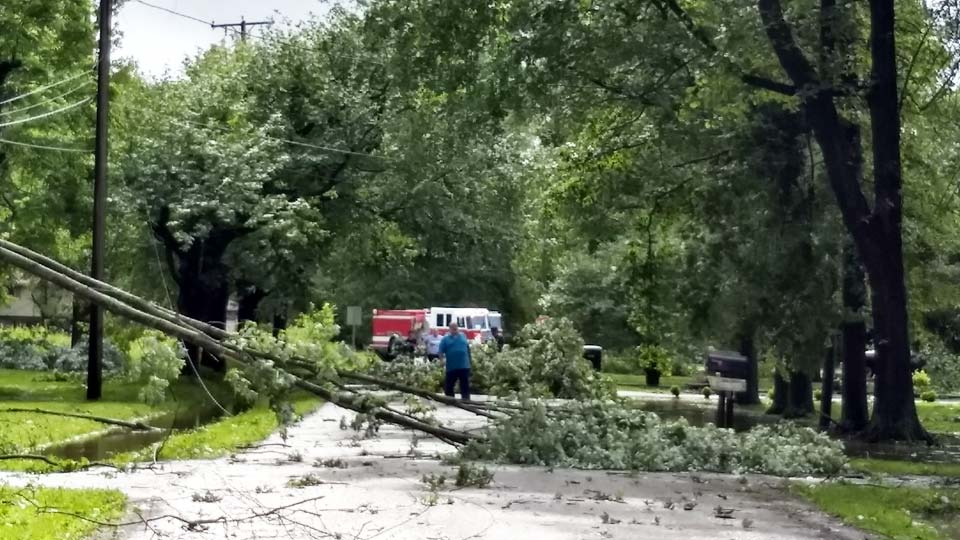 Tree down in Champion on Kincaid East Road.