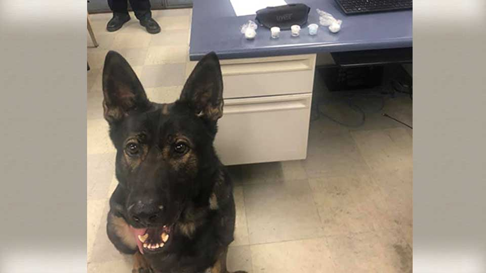East Liverpool police reported that their K-9, Noras, made a big drug bust.