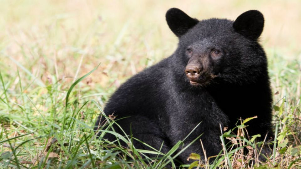 Police in Vienna Township are warning residents to be on the lookout for a bear that was seen roaming around.